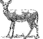 drawing, female, deer, grass, standing, animal, mammal