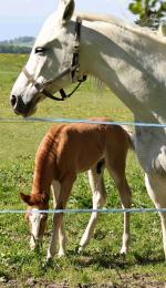 horse, horses, animal, brown, foal, pets, farm