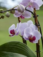 orchid, flower, flora, florist, plant, lovely, nature