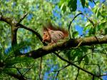 squirrel, rodent, climb, tree, nager, cute
