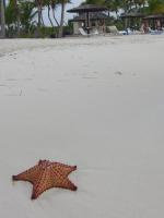 starfish, beach, antigua
