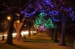 tree, trees, light, lights, decoration, colorful