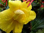 yellow, flower, rain, drops, nature, plant, waterdrop