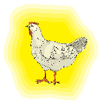 yellow, light, farm, bird, chicken, background, animal