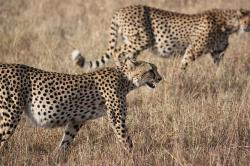 , africa, south africa, wild, nature, wildlife, animals