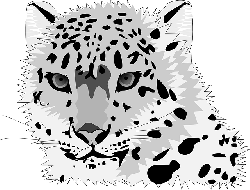 , animal, cat, leopard, snow leopard, wild cat