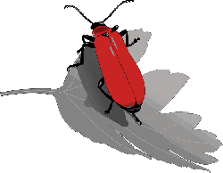 , beetle, bug insect, leaf, nature, animal, antennae, red