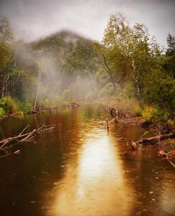 , forest, pond, water, rain, summer, beauty, fog