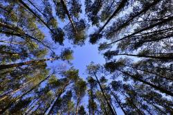 , forests, sky, list, from the bottom of the, green