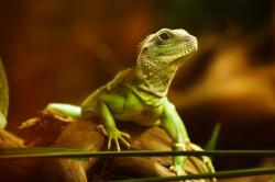 , lizard, dragon, reptile, animal, creature, green, head