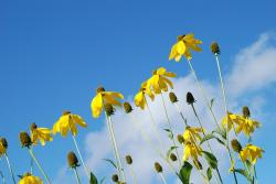 , nature, flower, sky, leaf, yellow