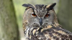 , owl, eagle owl, forest, night, bird, forests, feather