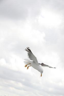 , seagull, bird, wings, fly, nature