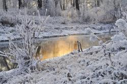 , snow, trees, winter, water