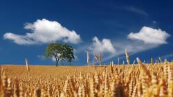 , summer, sun, sunshine, cereals, cornfield, ripe, mature