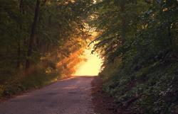 , sunlight, forest, way, path, evening, sunset, twilight