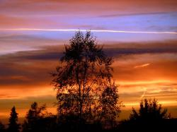 , sunset, tree, silhouette, colorful, weather, sky