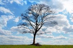 , tree, blue, sky, branch, branches, cloud, clouds