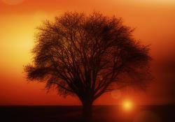 , tree, solitary, sunset, weather mood, clouds