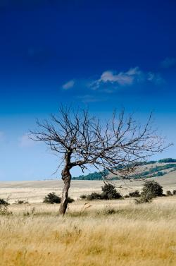 , wood, nature, sheer, drought, dead tree, decay