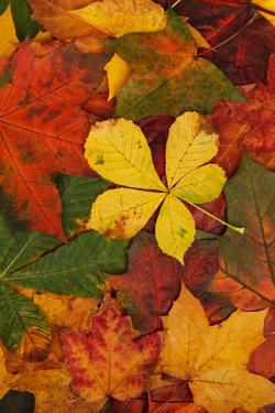 abstract, autumn, background, bright, brown, color