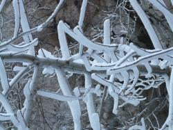 aesthetic, iced, ice, winter, frozen, cold, white