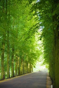alley, avenue, canopy, green, landscape, lane, leaves