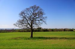 alone, blue, country, ecology, field, grass, green