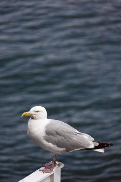 animal, beak, bird, gull, mouth, ocean, sea, seagull