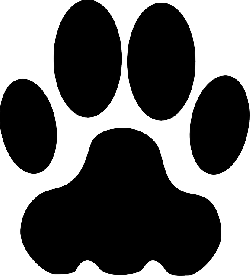 animal, cat, cougar, feet, foot, footstep, hunt, paw