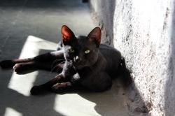 animals, animal, black, closeup, cat, sitting