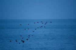 animals, animal, blue, water, black, sky, bird, birds