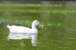 animals, animal, green, water, white, bird, birds, beak