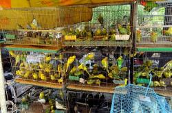 animals, birds, parakeets, market, business, pets, shop