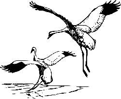 animals, cartoon, birds, bird, flying, crane, whooping