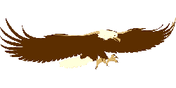 animals, cartoon, eagle, birds, bird, flying, eagles