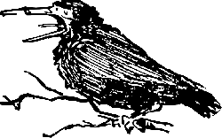 animals, old, cartoon, birds, bird, crow, animal, wings