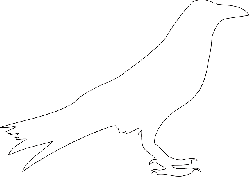 animals, outline, birds, bird, crow, animal, colouring