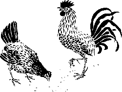 animals, tribal, cartoon, farm, rooster, hen, fighting