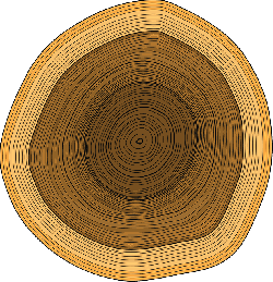 annual rings, trunk, tree, rings, wood, timber