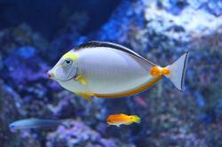 aquarium, beautiful fish, fish, colorful