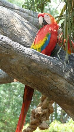 ara, parrot, plumage, colorful, bird, color