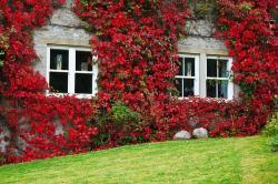 architecture, autumn, beauty, building, color, cottage