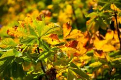 autumn, brown, color, fall, flora, green