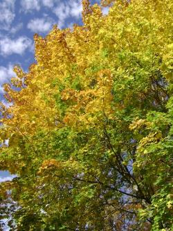 autumn, color, colors, leaves, yellow, fall, tree