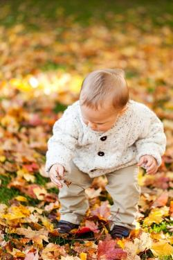 autumn, fall, baby boy, child, pick up, kid, outdoor
