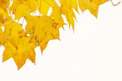 autumn, tree, trees, leaves, leaf, branches, yellow
