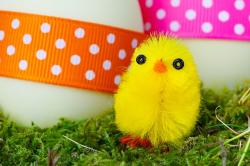 baby, bird, chick, chicken, color, colorful, cute