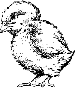 baby, small, drawing, bird, chick, fuzzy