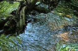 bach, water, waters, flowing, forest, green, movement